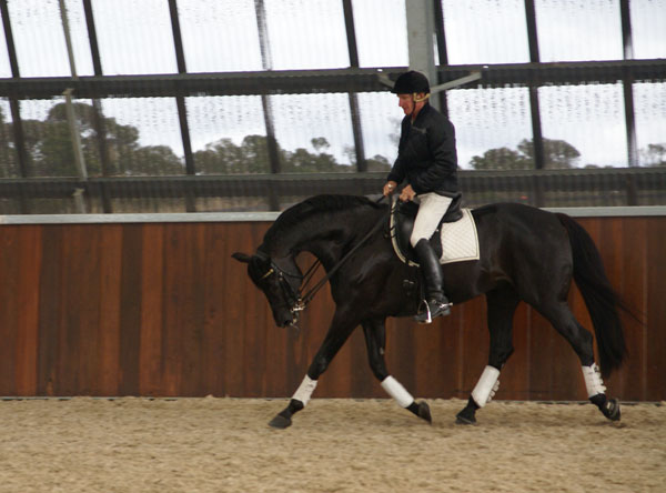 Heath and 'Fabio' demonstrating their long and low work, warming up for the Grand Prix movements